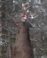 2017: Justin Martin of Lisbon: 167-pound, 8-pointer taken Nov. 16 in Waverly, Franklin County